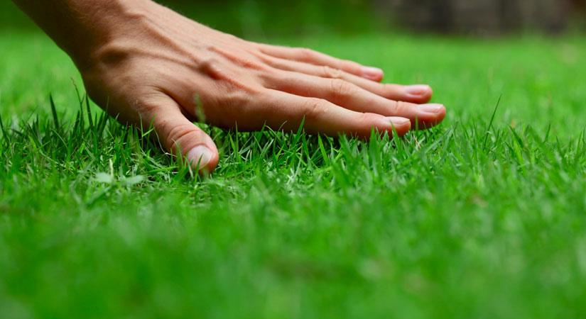 Что предлагает «Озеленение Сервис»?